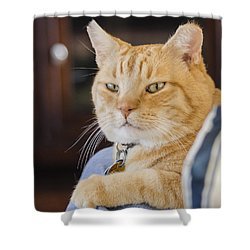 Charlie Cat Shower Curtain