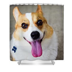 Charlie The Corgi Shower Curtain
