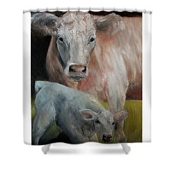 Charolais Cow Calf Painting Shower Curtain by Michele Carter