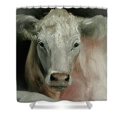 Charolais Cow Painting Shower Curtain