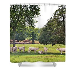 Charolais In The Shade Shower Curtain