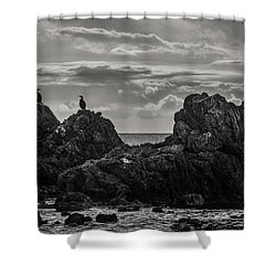 Chatting On Rocks Shower Curtain