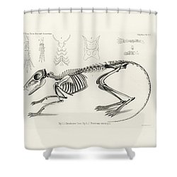 Checkered Elephant Shrew Skeleton Shower Curtain