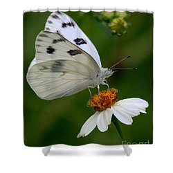 Checkered White Butterfly Shower Curtain by Myrna Bradshaw