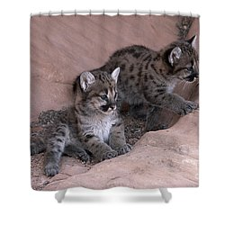 Checking It Out Shower Curtain by Sandra Bronstein