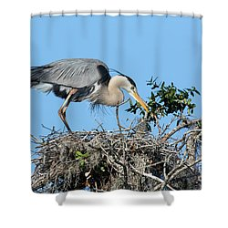Shower Curtain featuring the photograph Checking The Eggs by Deborah Benoit