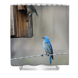 Checking The Nest Shower Curtain by Mike Dawson