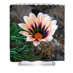 Shower Curtain featuring the photograph Cheerful Flower by Debra Thompson
