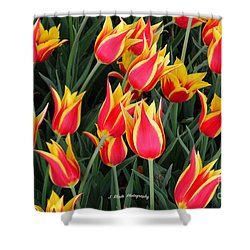 Cheerful Spring Tulips Shower Curtain