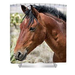 Shower Curtain featuring the photograph Cheers Where Everybody Knows Your Name by Michael Rogers