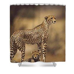 Cheetah Acinonyx Jubatus Mother With Shower Curtain by Gerry Ellis