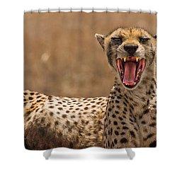 Cheetah Shower Curtain by Adam Romanowicz