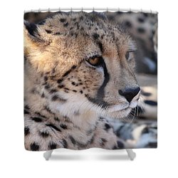 Cheetah And Friends Shower Curtain