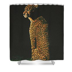 Cheetah At Sunset Shower Curtain