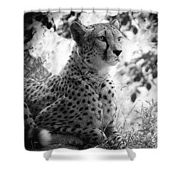 Cheetah B W, Guepard Black And White Shower Curtain