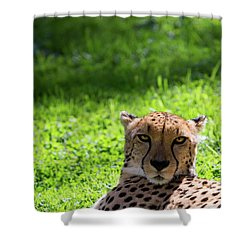 Shower Curtain featuring the photograph Cheetah Face by Rebecca Cozart