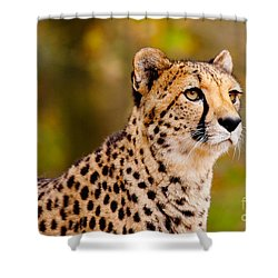 Cheetah In A Forest Shower Curtain