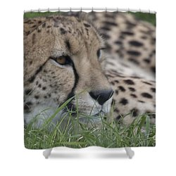 Cheetah In The Grass Shower Curtain by Anne Rodkin