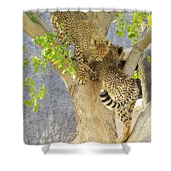Cheetah Traffic Jam Shower Curtain