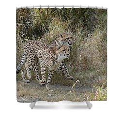Shower Curtain featuring the photograph Cheetah Trot by Fraida Gutovich