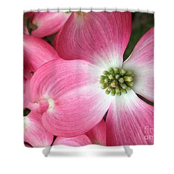 Cherokee Red Dogwood Shower Curtain