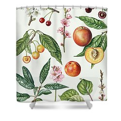Cherries And Other Fruit-bearing Trees  Shower Curtain by Elizabeth Rice