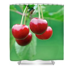 Cherries Shower Curtain by Michal Boubin
