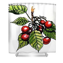 Shower Curtain featuring the painting Cherries by Terry Banderas