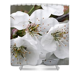 Cherry Blosoms Shower Curtain