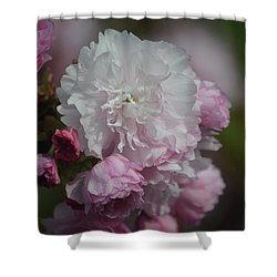 Cherry Blossom 2 Shower Curtain