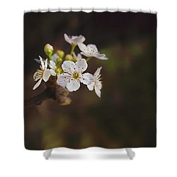 Shower Curtain featuring the photograph Cherry Blossom by April Reppucci
