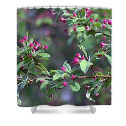 Cherry Blossom Blooms Shower Curtain