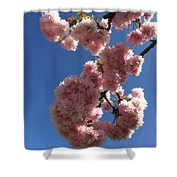Cherry Blossom Here At Cavorting In The Shower Curtain
