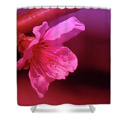 Cherry Blossom Shower Curtain by Jeff Swan