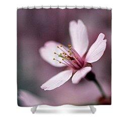 Cherry Blossom Shower Curtain by Joseph Skompski