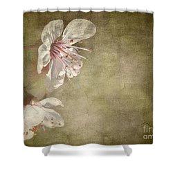 Cherry Blossom Shower Curtain by Meirion Matthias