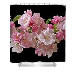 Cherry Blossom On Black Shower Curtain by Gill Billington