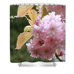 Shower Curtain featuring the photograph Cherry Blossom Secrets by Brandy Little