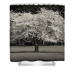 Cherry Blossom Tree - Ocean County Park Shower Curtain