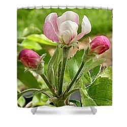 Cherry Blossom Trio Shower Curtain