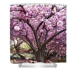 Cherry Blossom Wonder Shower Curtain