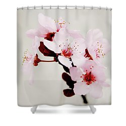 Shower Curtain featuring the mixed media Cherry Blossoms 1- Art By Linda Woods by Linda Woods