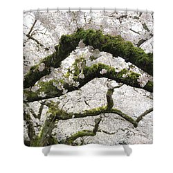 Shower Curtain featuring the photograph Cherry Blossoms 104 by Peter Simmons