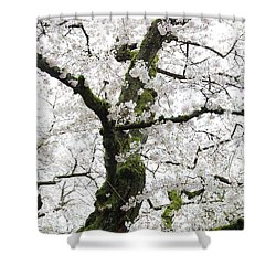 Shower Curtain featuring the photograph Cherry Blossoms 119 by Peter Simmons