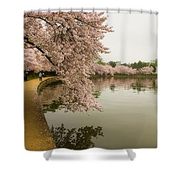 Cherry Blossoms Along The Tidal Basin 8x10 Shower Curtain