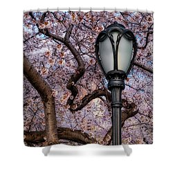 Shower Curtain featuring the photograph Cherry Blossoms At Central Park Nyc by Susan Candelario