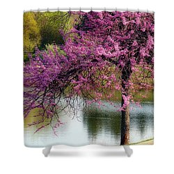 Cherry Blossoms By The Pond Shower Curtain