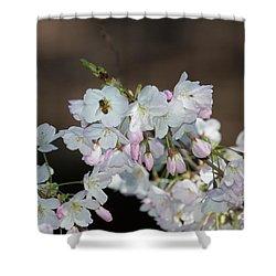 Cherry Blossoms Shower Curtain by Glenn Franco Simmons