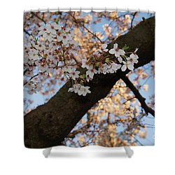 Cherry Blossoms Shower Curtain by Megan Cohen