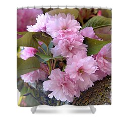 Cherry Blossoms Nbr2 Shower Curtain by Scott Cameron
